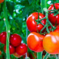 Điểm danh các loại thực phẩm tốt cho da an toàn hiệu quả