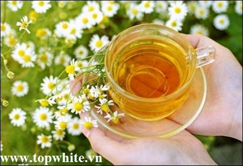 Chamomilla Recutita Flower Extract là gì?