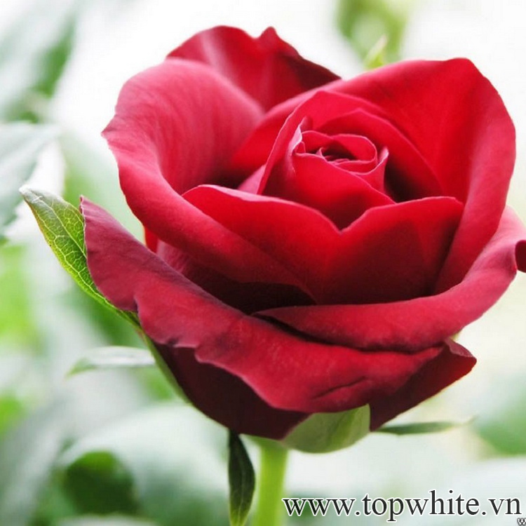 20 10 nên tặng gì cho người yêu lãng mạng